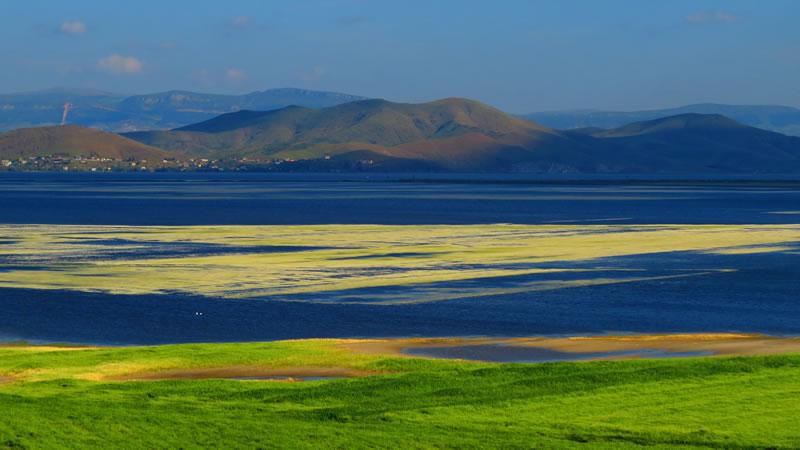 Gavur Gölü yüzeyinde papatyalar