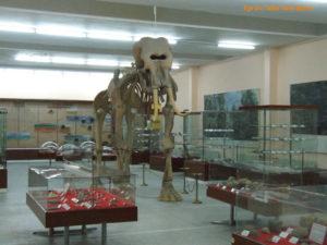 Ege Üniversitesi Tabiat Tarihi Müzesi