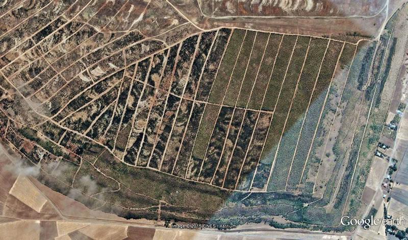 Afşin-Elbistan Termik Santrali ağaçlandırma sahası