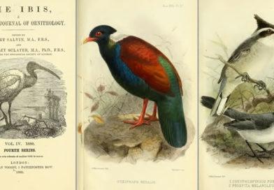 Charles G. Danford: Anadolu'da Yaban Hayatı Peşinde Bir Zoolog